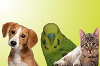 Pets Humanitarian Medal